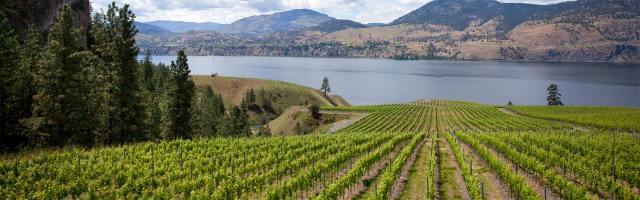 okanagan-okfalls-vineyards2 courtesy British Columbia Wine Institute